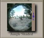 IBLジャングル