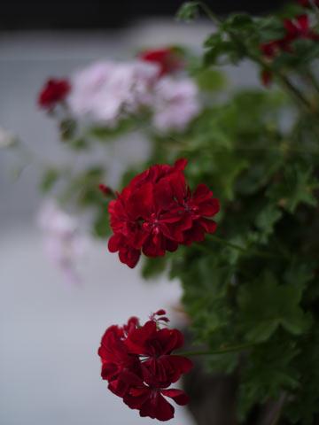 雨の日の夕方17時頃