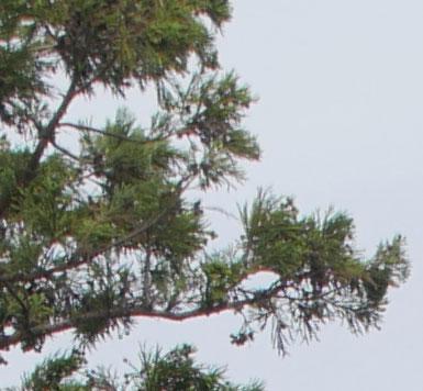 細い枝の描写