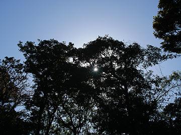 日中の時間帯の逆光写真