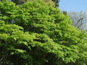 5月の新緑